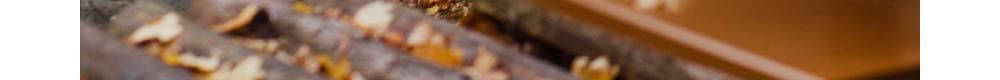 秋の魅力溢れる朝陽リゾートホテルへ温泉旅行に出かけよう!