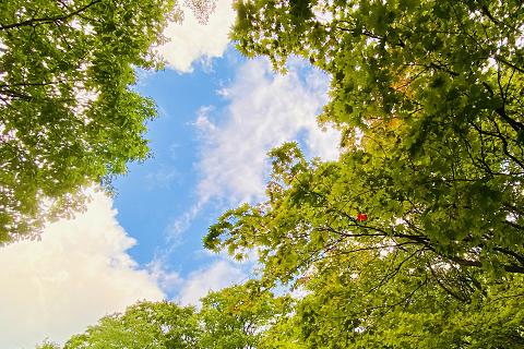 層雲峡からほど近い紅葉谷の木々