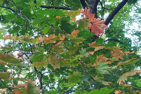 紅葉谷公園の木々の紅葉は少しずつ進んでいます
