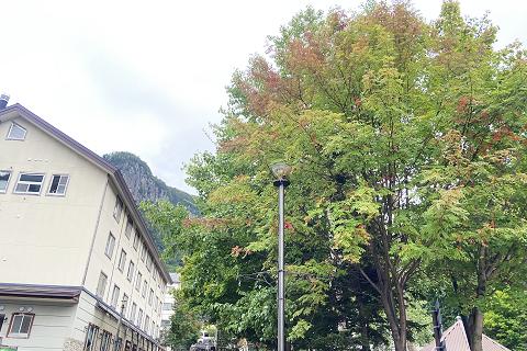 層雲峡温泉街の木々